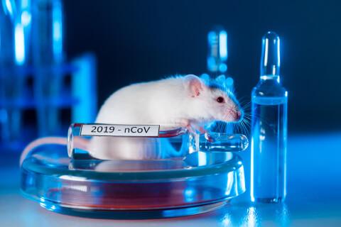 Alacsony dózisú besugárzás: egy új lehetőség a Covid-19 kezelésére