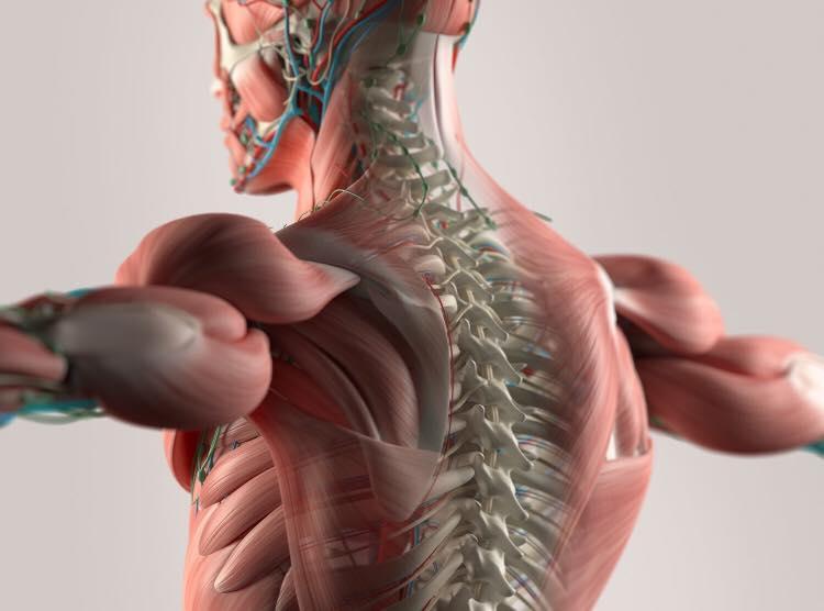 Musculoskeletális radiológiai továbbképzés (DE ÁOK/2018.II/00045)