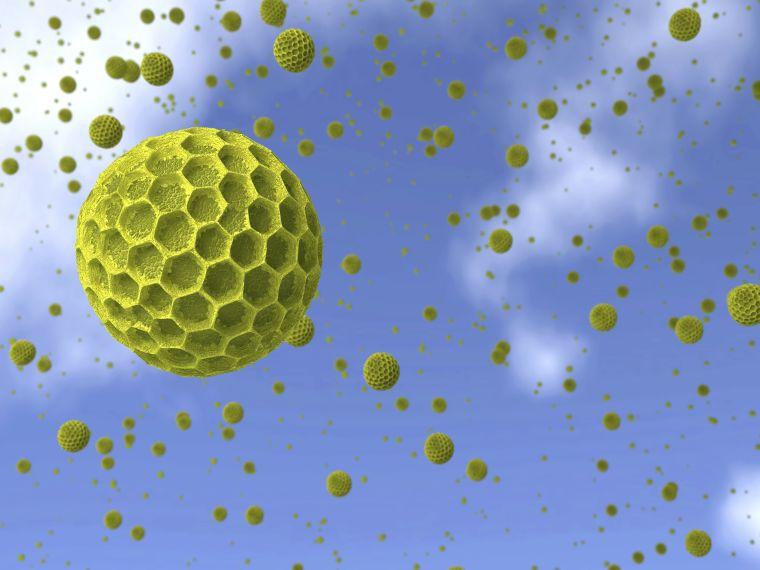 A parlagfű miatt is több lehet a koronavírusos beteg